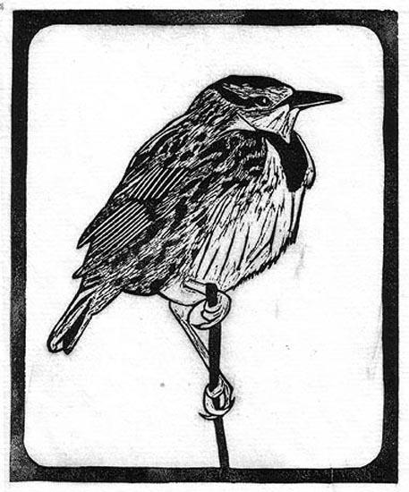 Meadowlark - Eastern.jpg
