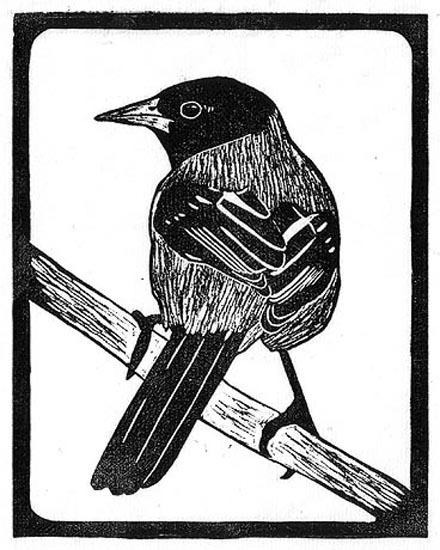 Oriole - Audubons.jpg