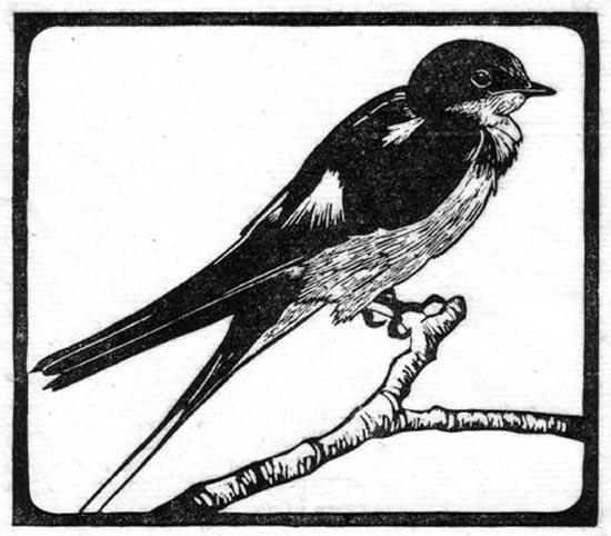 Swallow - Barn.jpg