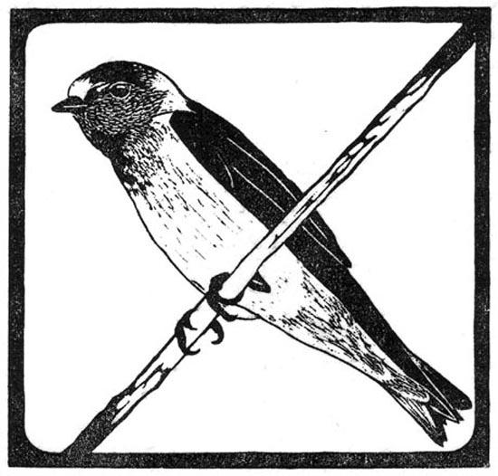 Swallow - Cliff.jpg
