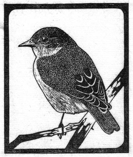 Thrush - Bluebird - Eastern.jpg
