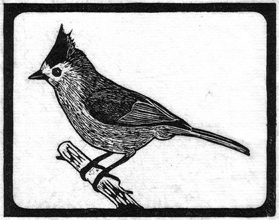 Titmouse - Black Crested.jpg