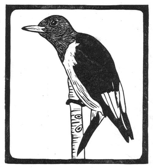 Woodpecker - Red Headed.jpg