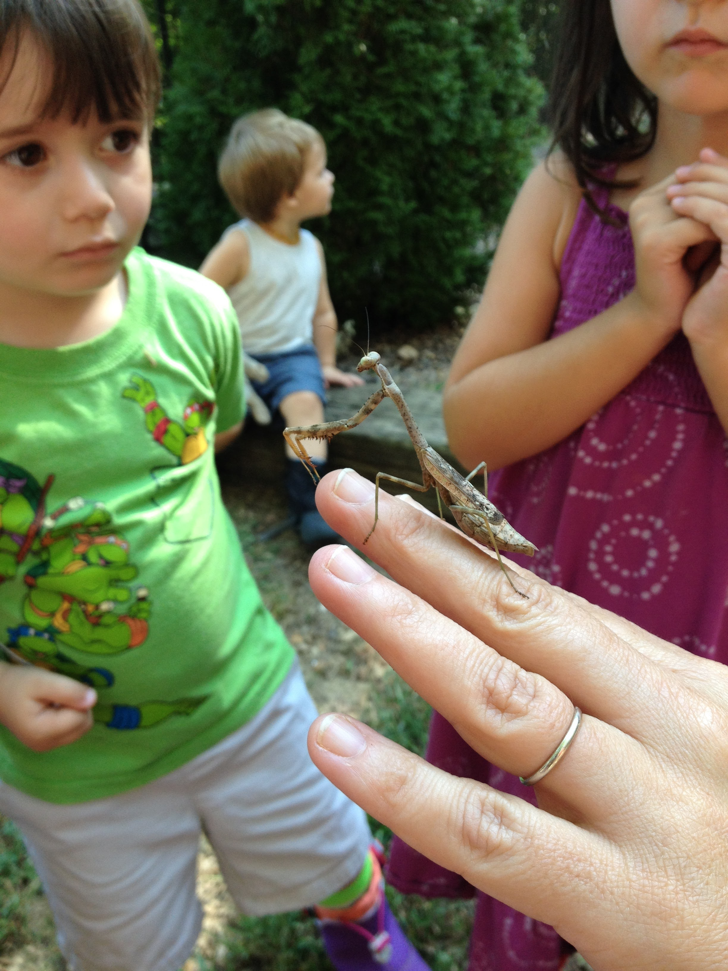 Nature is a powerful tool for learning lessons of both bravery and empathy.  Upon discovering a pregnant mantis during the summer, some students were wary at first.  After spending some time watching it, many were excited to hold it, but were also extremely careful knowing that their behavior could potentially impact an entire generation of baby mantises.  When they had had their fun, the students were all in agreement that she had to be let go back into the woods to find her unborn children a home.