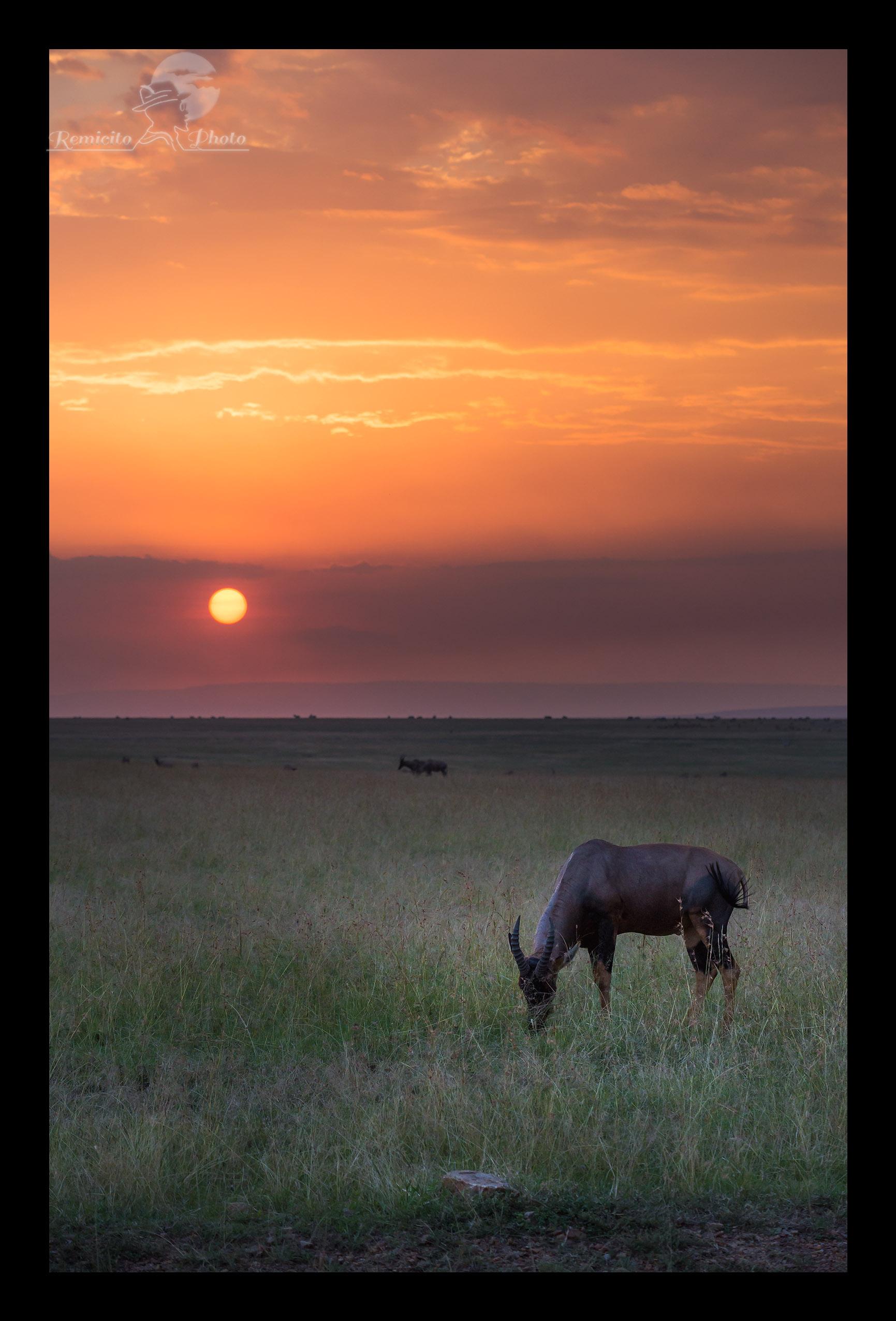 remicito photo, photo savane, photo afrique, photo safari afrique, photo safari kenya, photo safari tanzanie, photo afrique couleur, photo couleur kenya, photo couleur tanzanie, photo couleur Masai mara, photo serengeti, photo voyage afrique, photo voyage kenya, photo voyage tanzanie, photo savane afrique, photo savane kenya, Photo savane tanzanie, belle photo afrique, acheter photo afrique, tirage photo afrique, acheter photo kenya, acheter photo tanzanie, tirage photo safari, jolie photo savane, offrir photo afrique, acheter photo coucher de soleil, photo coucher de soleil Afrique,  Sunset Africa, color africa, color africa photo, kenya photograph, kenya savanna photo, tanzania photograph, kenya savanna photographs, tanzania savanna Photo, best africa shot, best africa photo, best Sunset shot, best Sunset photo, best Sunset photograph, buy photo africa, africa gift photo, Sunset gift photo, buy Sunset photo, buy africa Sunset photo,  Foto puesta del sol, foto africa regalo, comprar foto africa, offrecer foto africa, africa maravilla, africa linda, foto color, foto kenya, foto tanzania, leon africa, puesta del sol sabana, puesta del sol Kenya, puesta del sol Tanzania,  photo couleur paysage, color photo, color photography, photo décoration mur, photo décoration chambre, photo décoration toilettes, cadeau décoration, idée cadeau décoration, idée cadeau pour lui, idée cadeau pour elle, idée cadeau photo mariage, idée cadeau photo nouvel appart, idée cadeau photo nouvel appartement, idée cadeau photo nouvelle maison, idée cadeau photo décoration, idée cadeau originale, idée cadeau fête des pères, idée cadeau fête des mères, idée cadeau naissance, idée cadeau anniversaire, idée cadeau anniversaire homme, idée cadeau anniversaire femme, idée cadeau noël, idée cadeau noel, idée cadeau grand-mère, idée cadeau grand-père, idée cadeau grands-parents, idée cadeau parents, idée cadeau enfants, idée cadeau adulte,  jolie photo,  offrir photo, offrir belle photo, offrir photo c