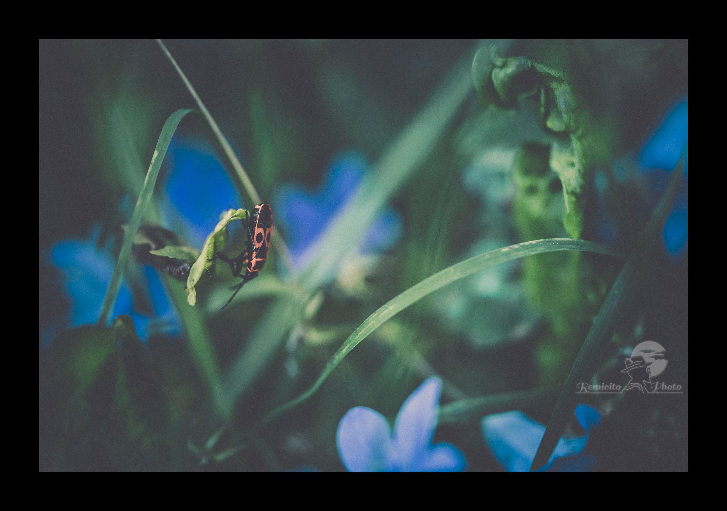 remicito photo, macro photo, idée cadeau, macro photography, bug, insecte photo gros plan, les petits mondes, small worlds, los pequeños mundos, cadeau pour lui, cadeau pour elle, tirage belle photo, idée cadeau déco, cadeau belle photo