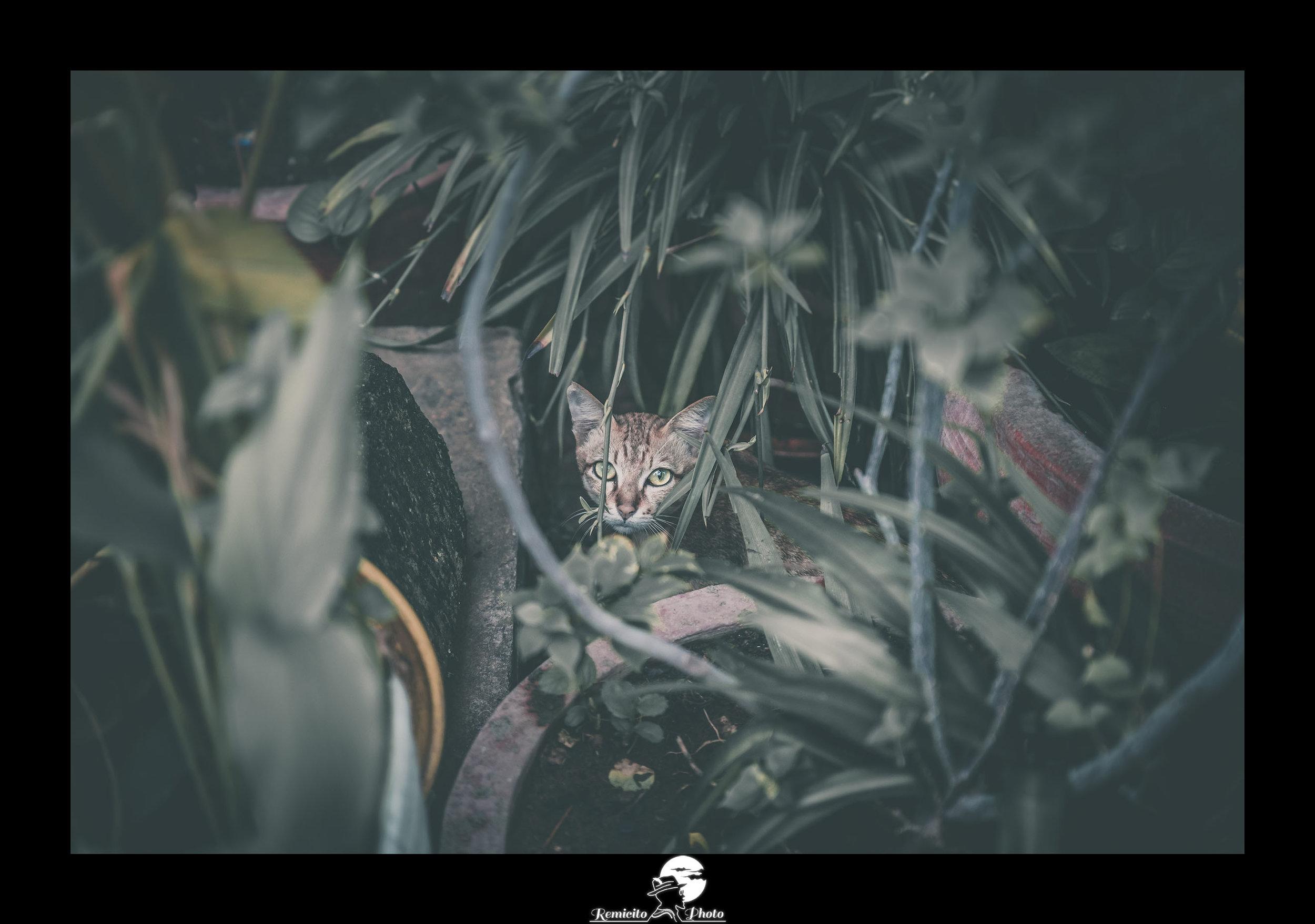 remicito photo, image du jour, photo du jour, photo of the day, cat cambodia, chat cambodge, photo chat plantes, idée cadeau, belle photo