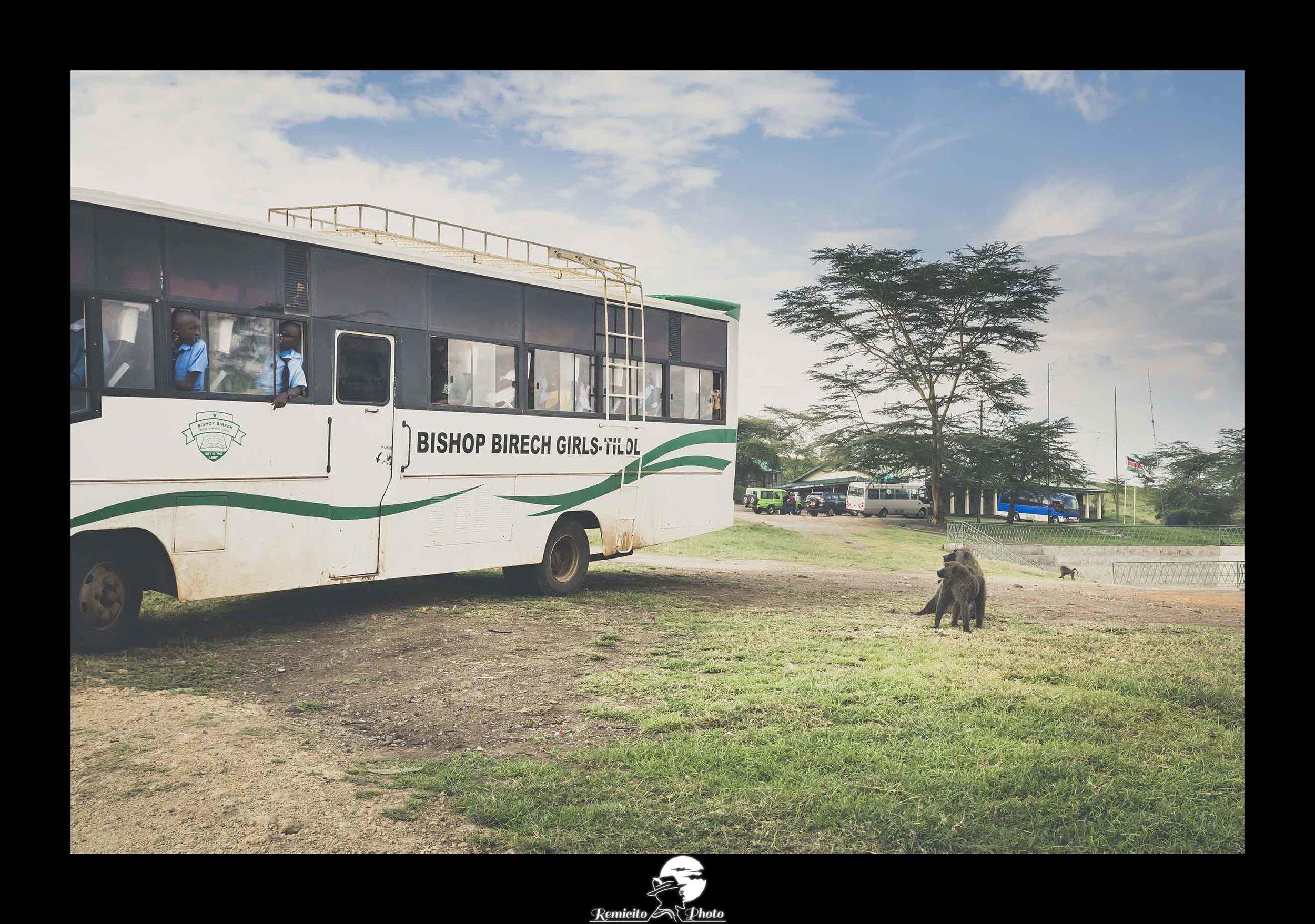 remicito photo, remicito, image du jour, photo du jour, photo of the day, nakuru national park photo monkey, singe parc national Nakuru, belle photo singes, idée cadeau photo singes, écoliers Kenya, photo singe Kenya