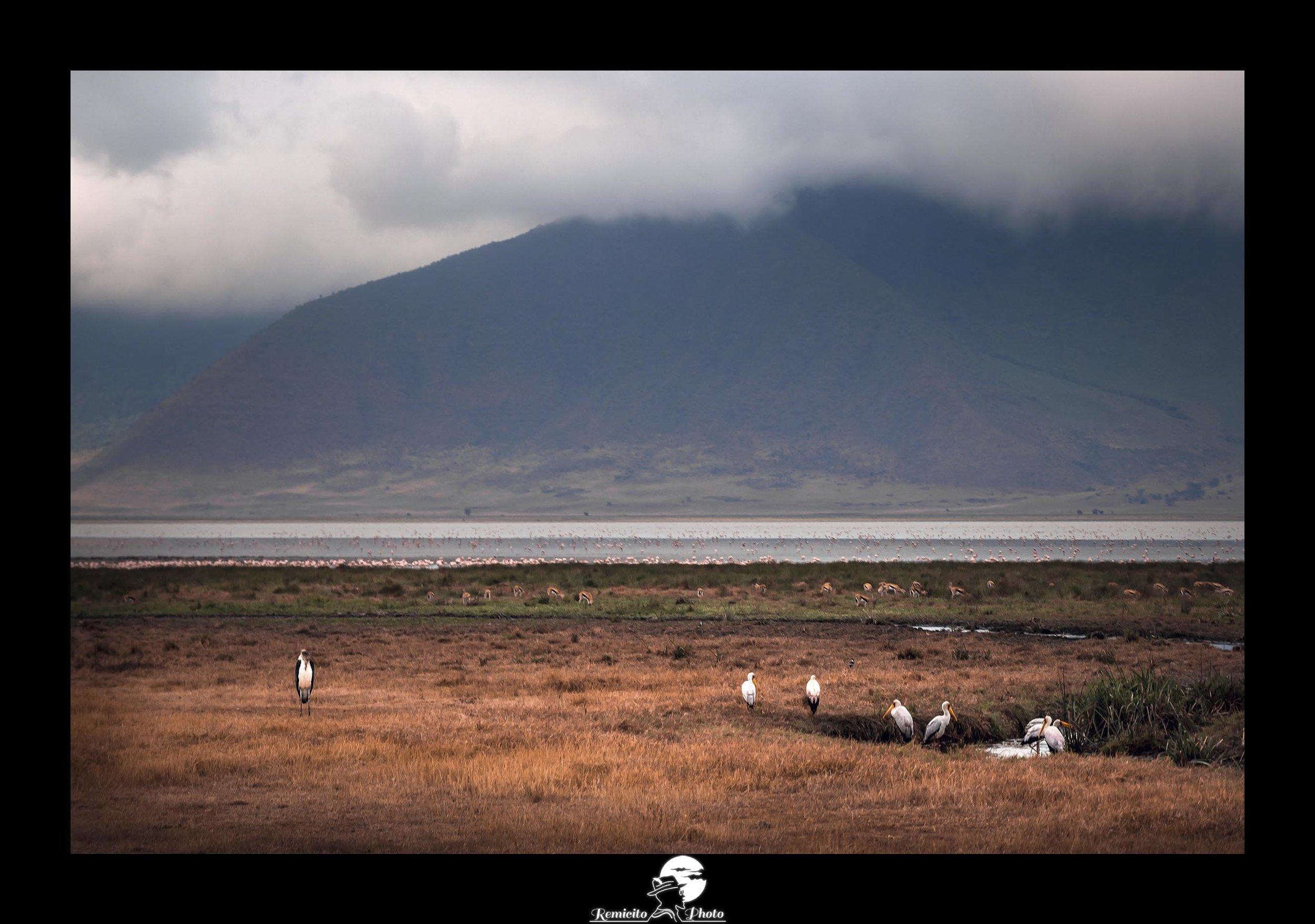 Remicito photo, remicito rémi lacombe photographe, belle photo tanzanie cratère ngorongoro, belle photo idée cadeau afrique animaux tanzanie