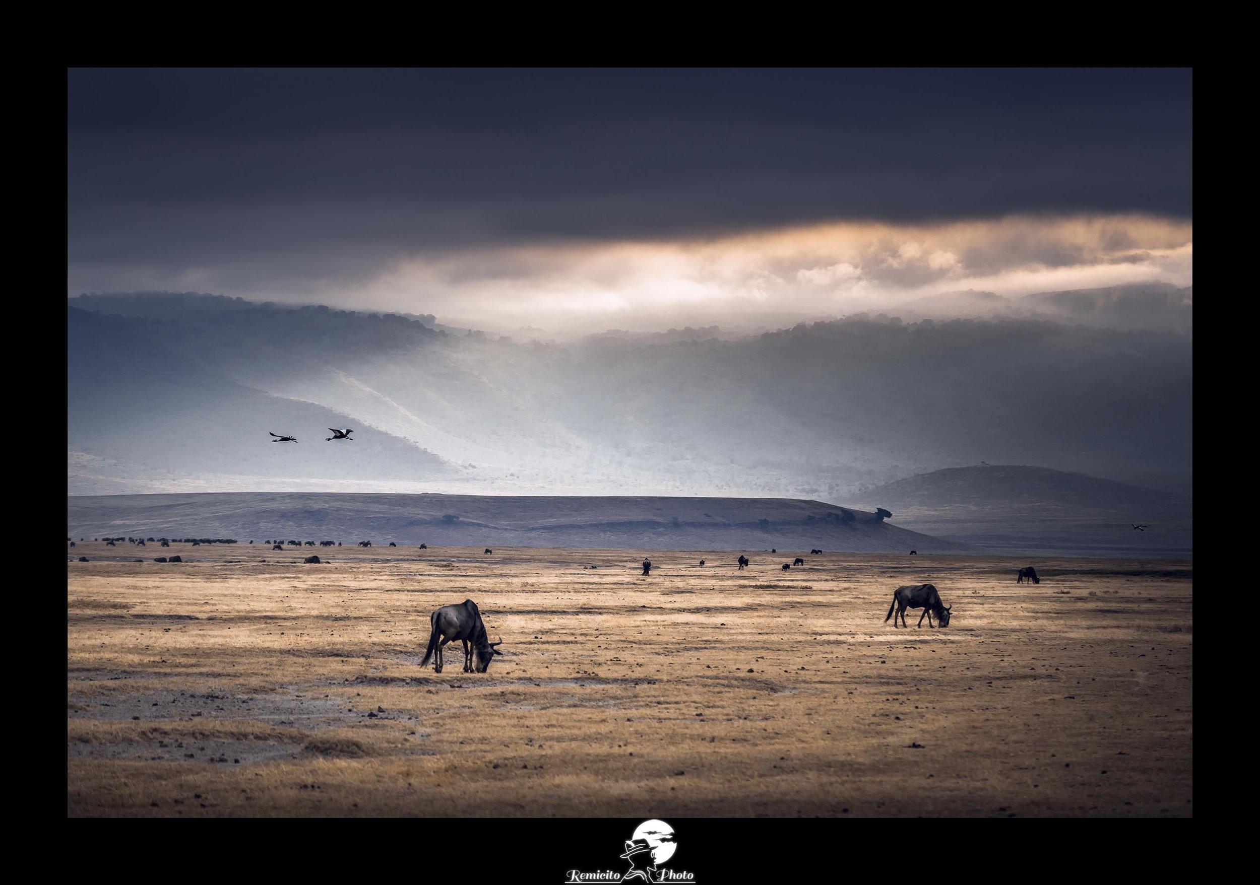 Remicito photo, remicito, image du jour, photo du jour, belle photo remicito rémi lacombe photographe voyage, cratère de ngorongoro belle photo idée cadeau, animaux tanzanie safari afrique