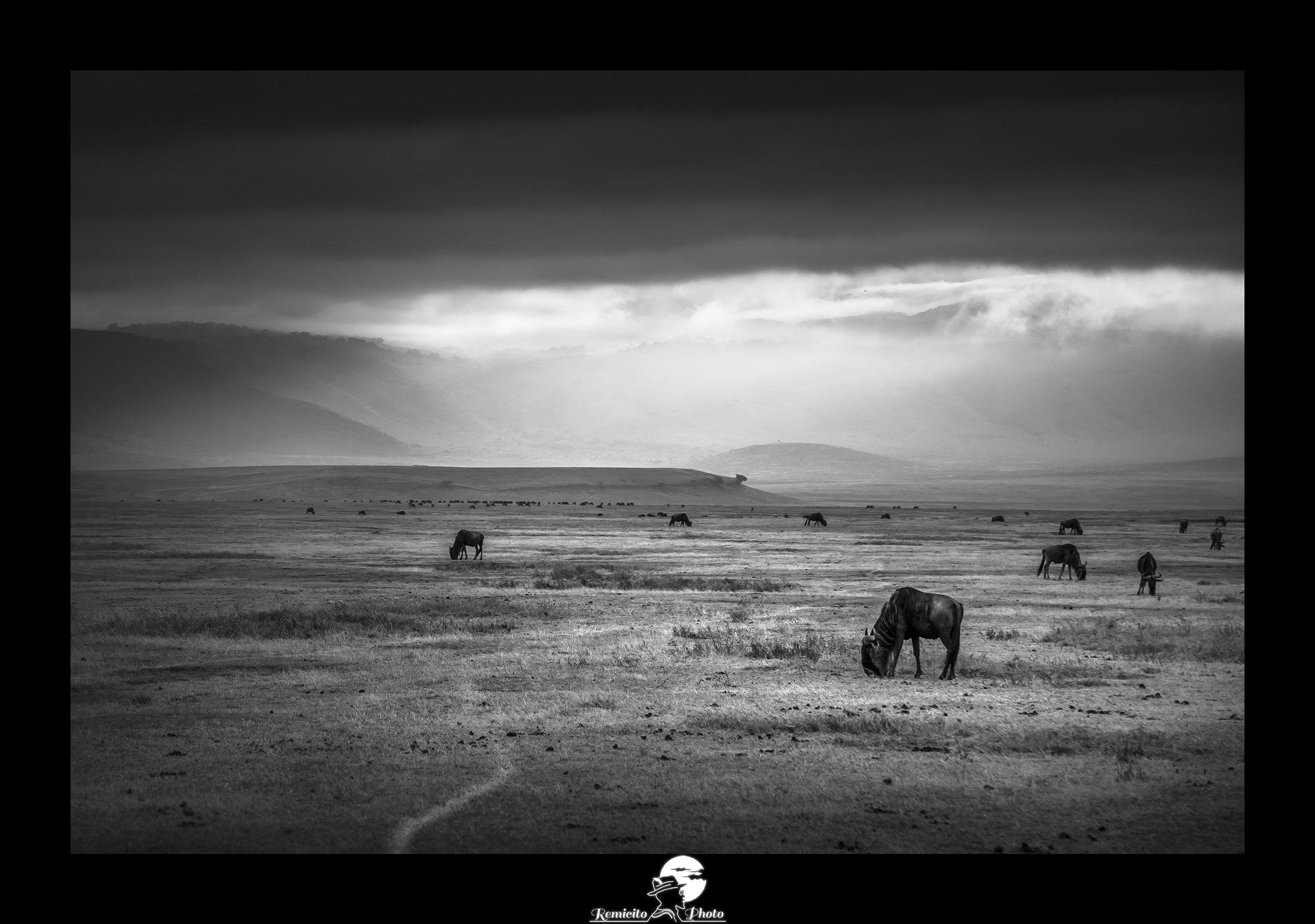 Remicito photo, remicito rémi lacombe photographe voyage, belle photo noir et blanc afrique sauvage, idée cadeau belle photo animaux afrique, cratère de ngorongoro afrique tanzanie animaux