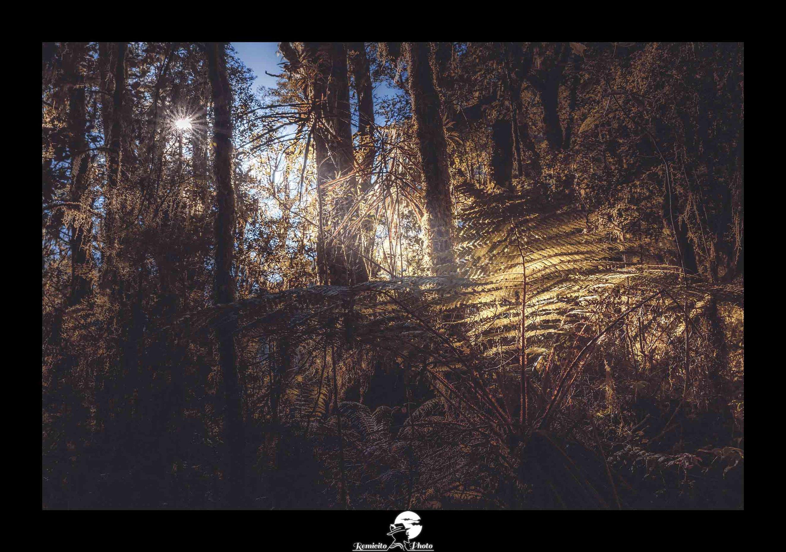 Remicito photo, remicito rémi lacombe photographe paris, belle photo idée cadeau forêt lumière, rayon de lumière forêt fougère
