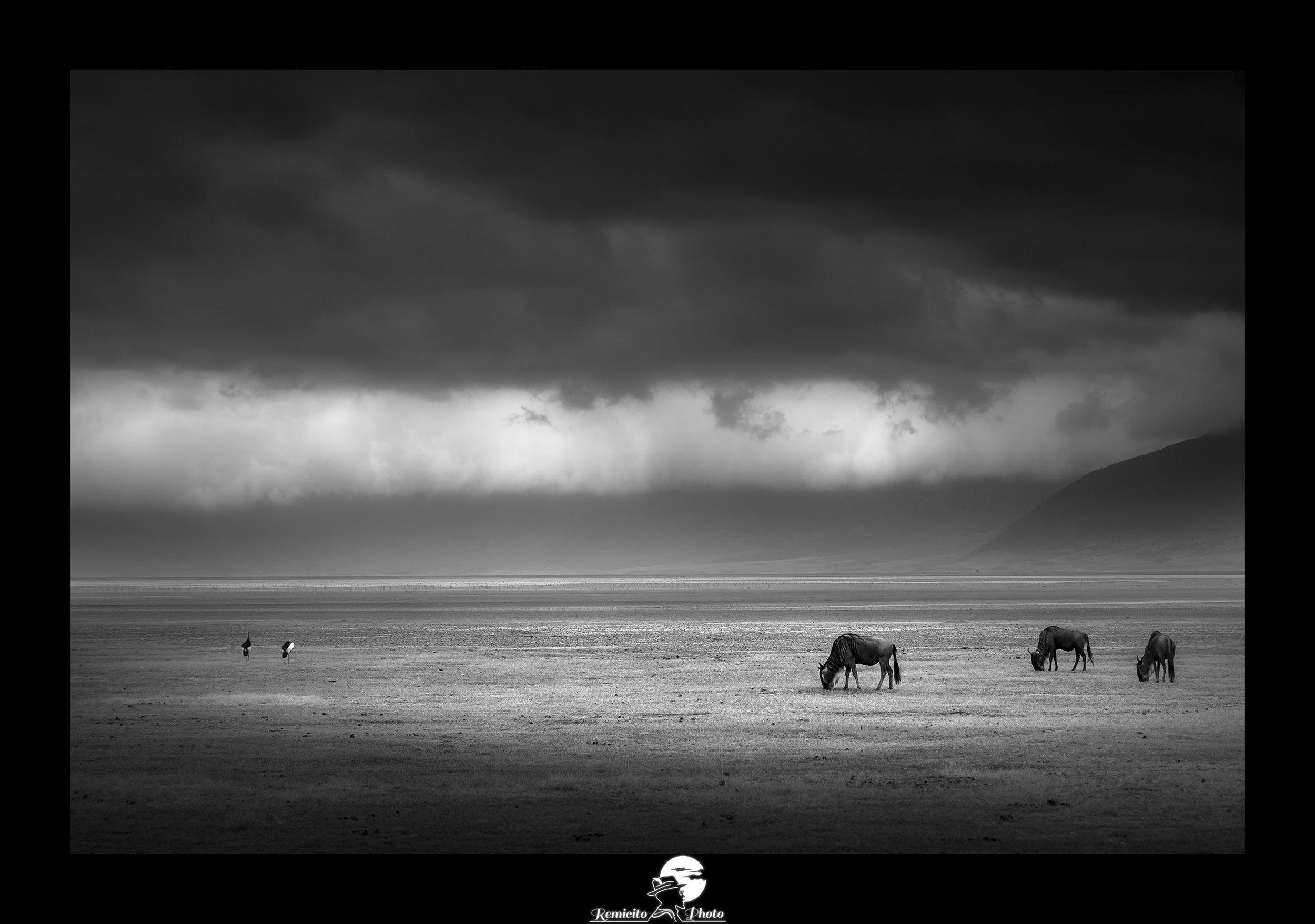 Remicito photo, remicito rémi lacombe photographe paris, belle photo noir et blanc afrique, vie sauvage cratère n'gorongoro tanzanie, belle photo idée cadeau noir et blanc