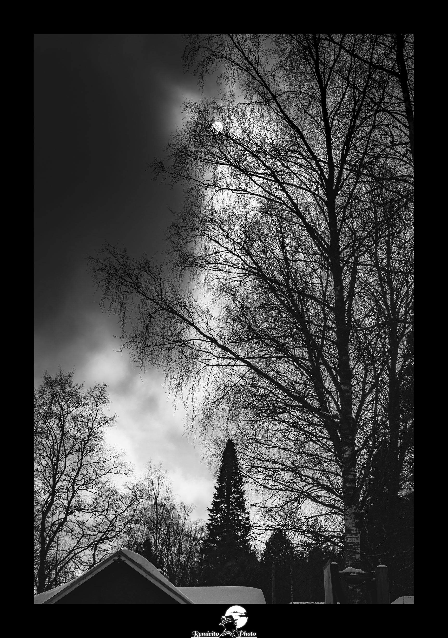 Remicito photo, remicito rémi lacombe photographe paris, belle photo noir et blanc arbre soleil, idée cadeau photo noir et blanc arbre neige