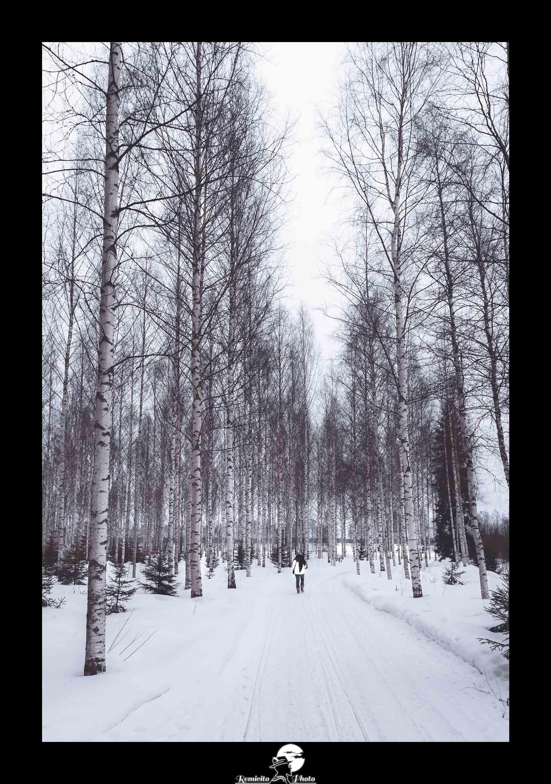 Remicito photo, remicito rémi lacombe photographe paris, belle photo remicito finlande paradis blanc, photo forêt idée cadeau neige