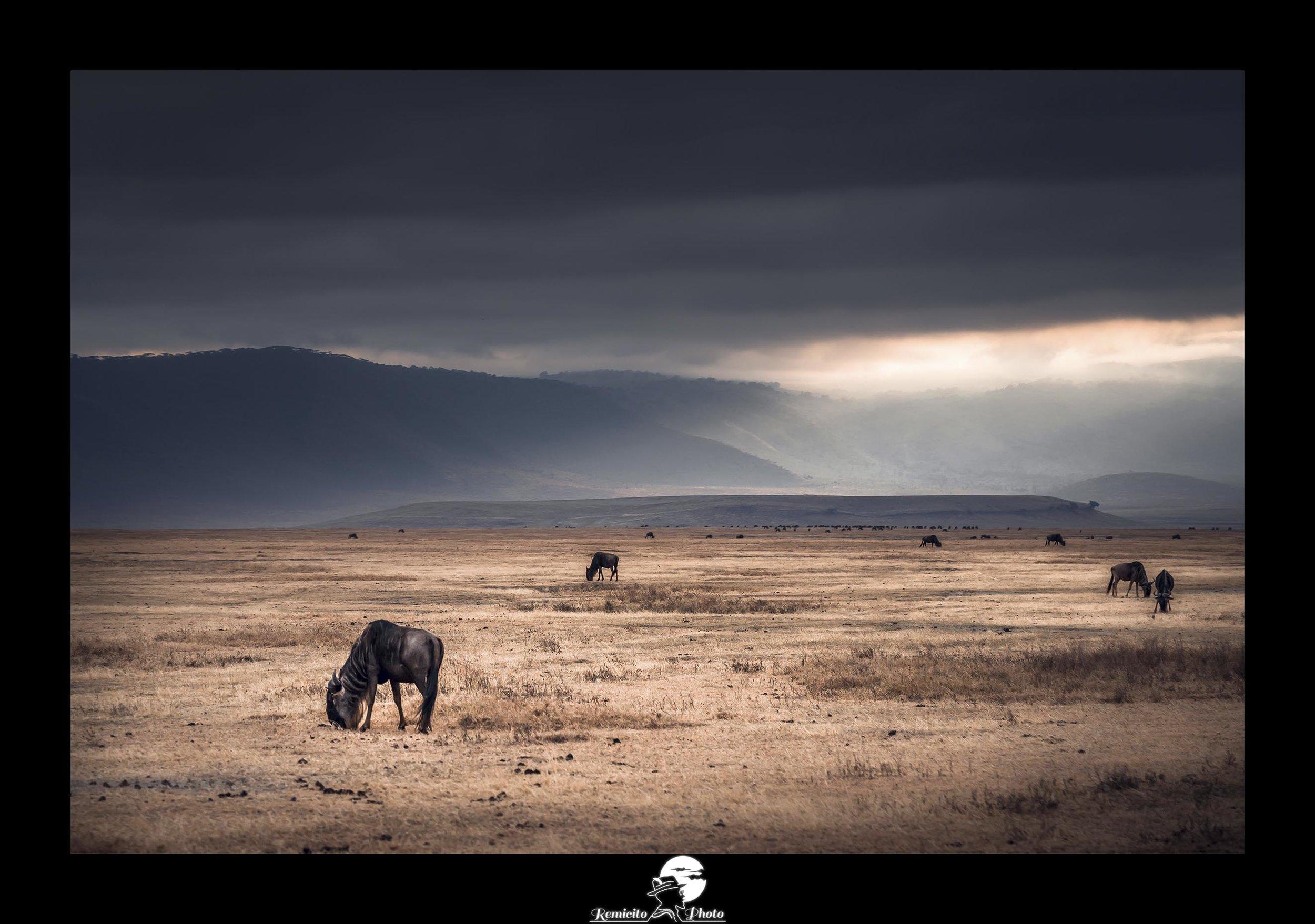 remicito, photoclub paris val-de-bièvre, remicito rémi lacombe, cratère ngorongoro, photo afrique animaux, belle photo animaux idée cadeau