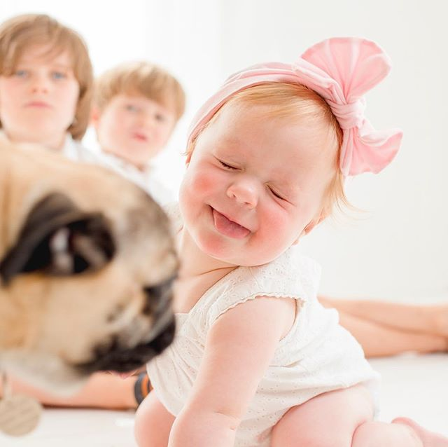 Unscripted moments are the best! Winston and Phoebe, my Pugs ran in on my session and stole the show! This gorgeous little girl (luckily) has a puggie of her own (so was used to dogs and pugs) and was delighted, although a bit confused. I love these moments. Husband was away in Singapore and kids were in the house and let the dogs out. Juggling work and kids at times like these can be a bit tricky. #travellinghusband #unscriptedmoments #Singapore #inverclyde #pugs #dogs #babies #familyphotography #photographer #whitecompany #natural #family #brookfield #glasgow #portglasgow #lanark #fourleggedfamilymember #moment #magazine #pugsarecool #pugglesofinstagram #pugswag #pug_feature #familyportraits #babystyle #babystagram