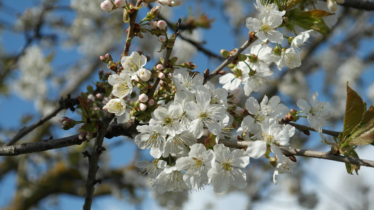 In Bloom   Over pruning can mean your trees don't blossom. Leave it to the experts (that's us!)