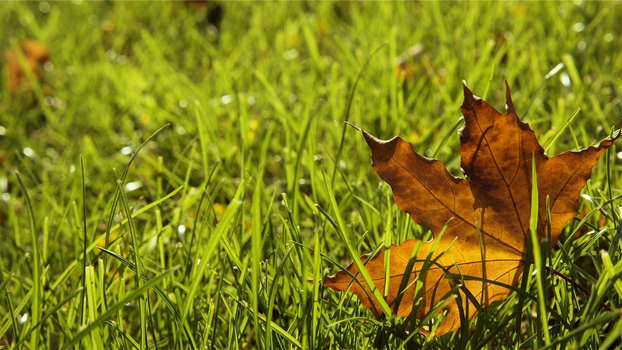 A lawn for all seasons   Whether it's the first cut of the season or last cut before winter, we're here all year round.