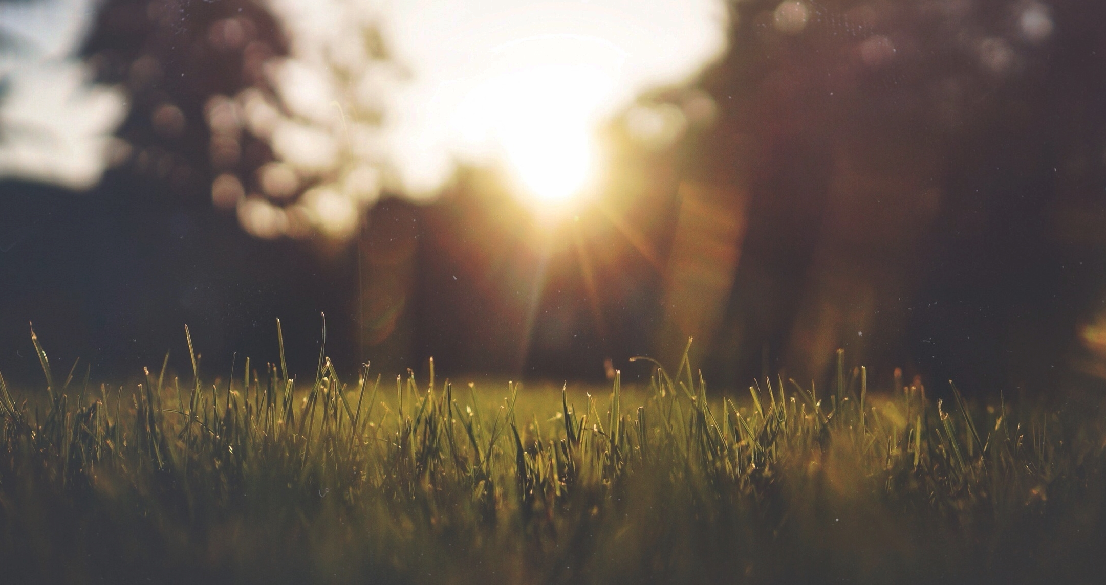 The grass really is greener...   Switch your garden maintenance service to us and we're sure you'll see the difference.