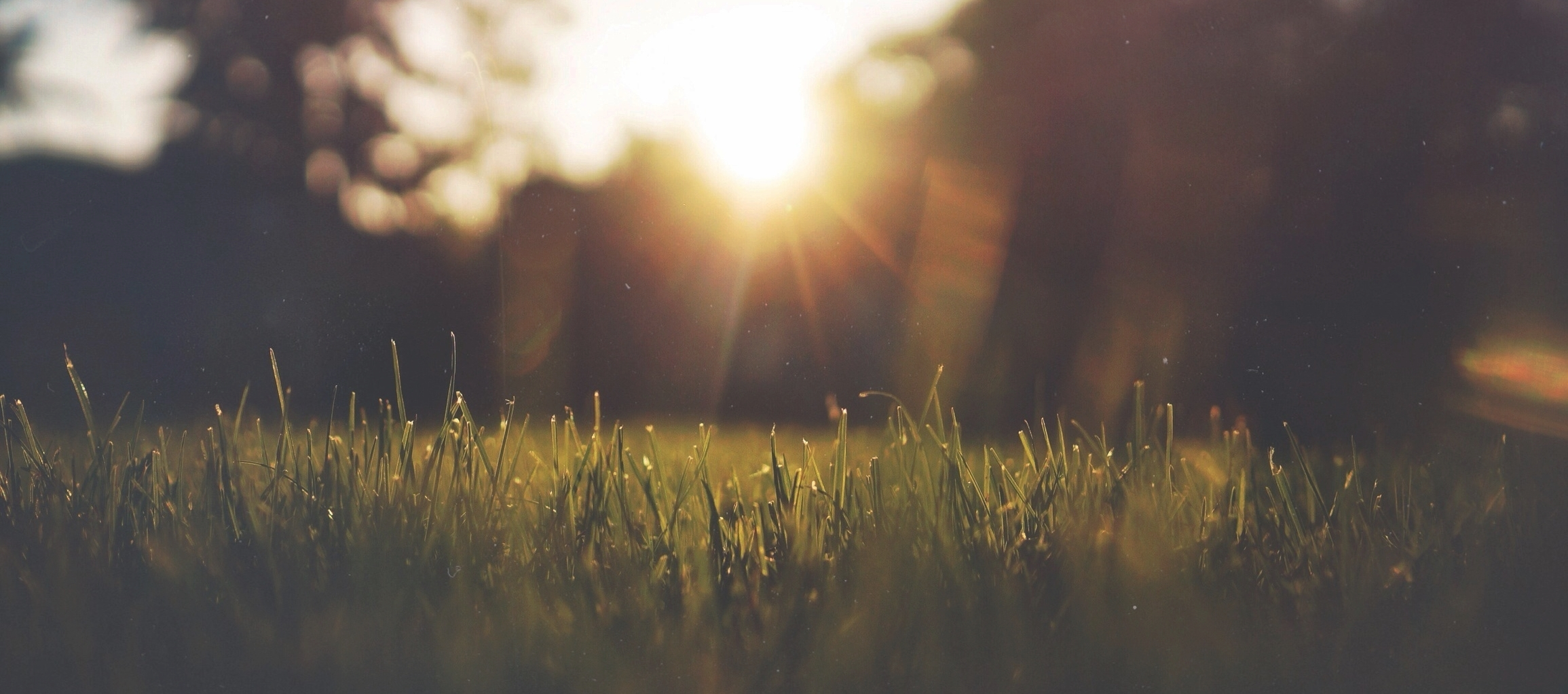 The Grass Is Greener   Switch your lawn maintenance contract to us and we're certain you'll see the difference.