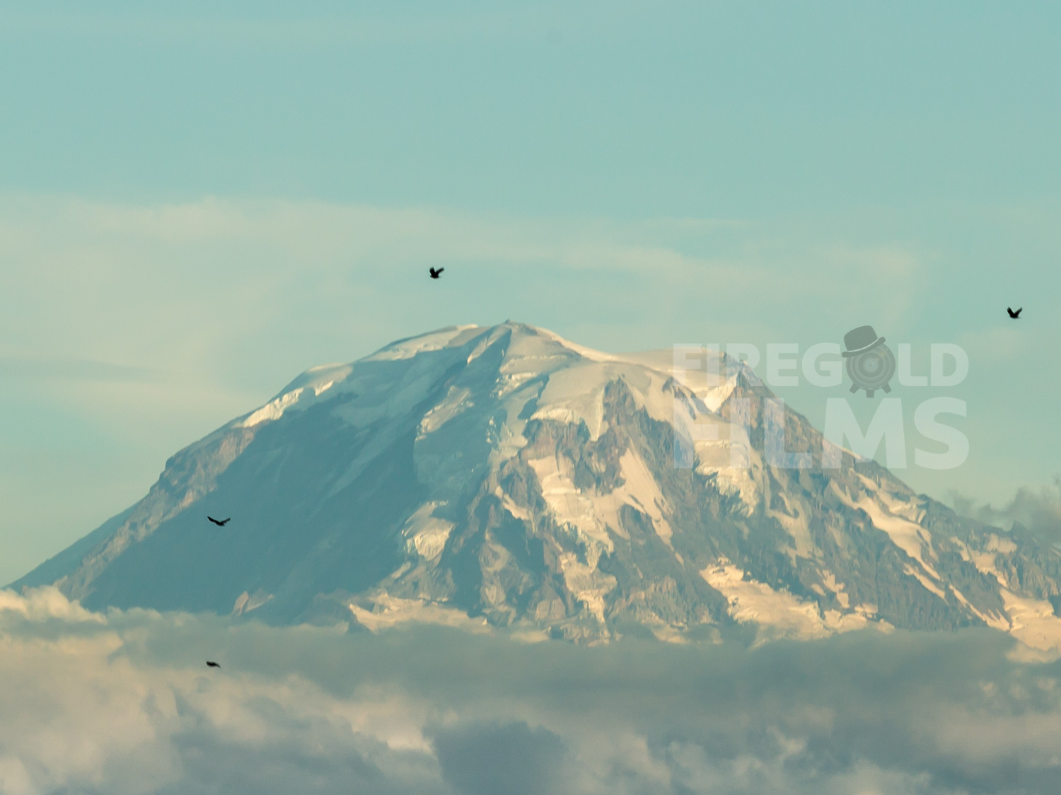 mount-ranier-birds