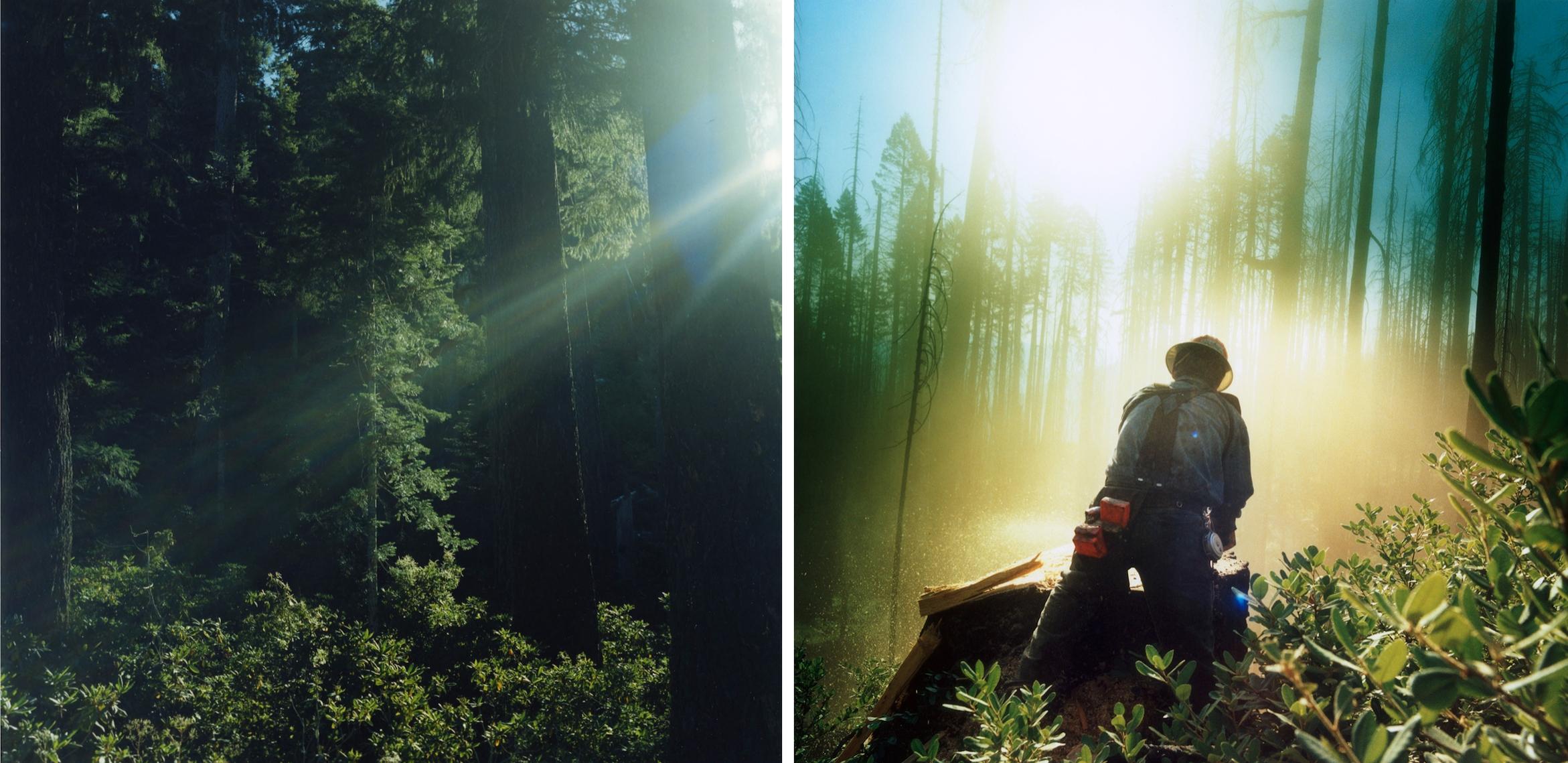 Forestdefenders2.jpg