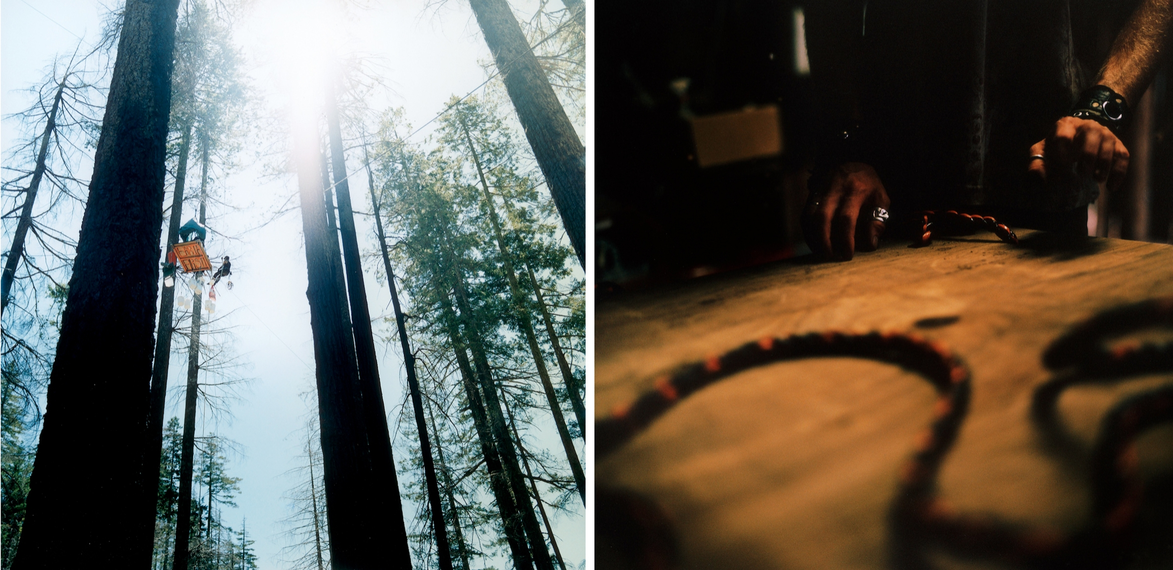 Forestdefenders5.jpg