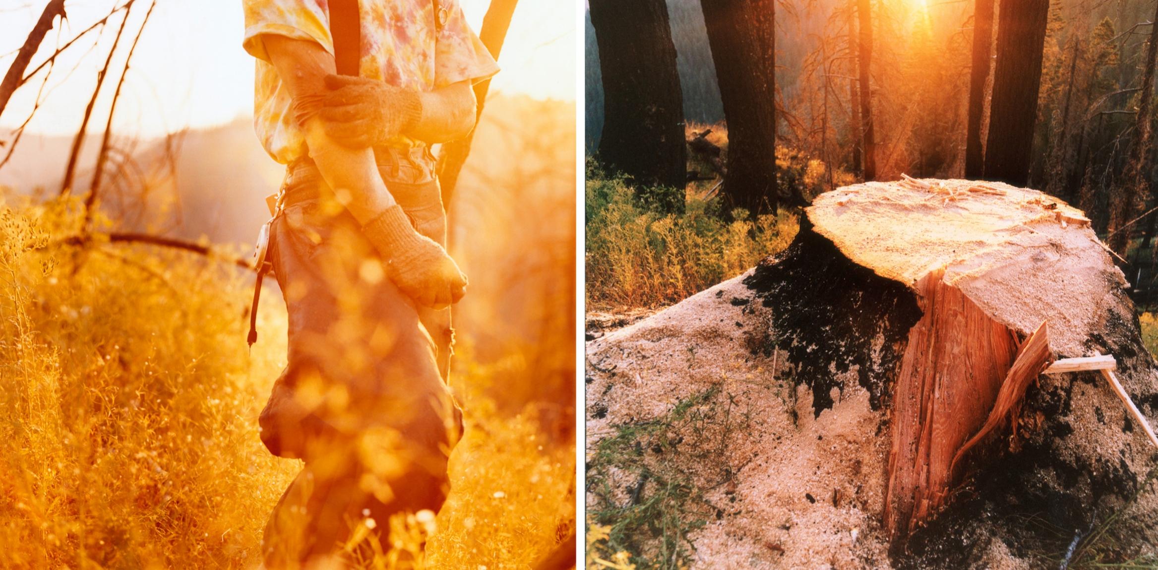 Forestdefenders12.jpg