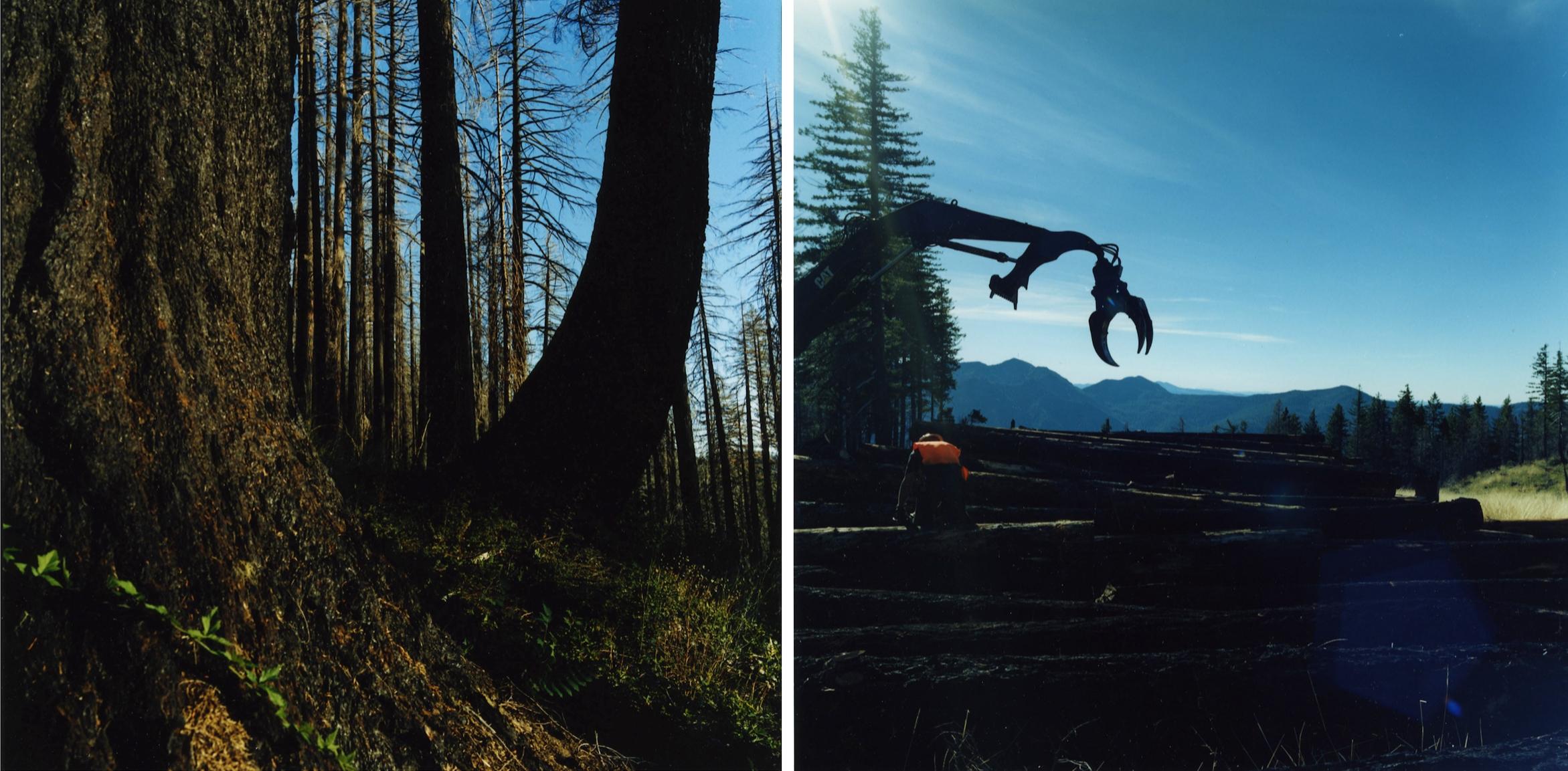Forestdefenders13.jpg
