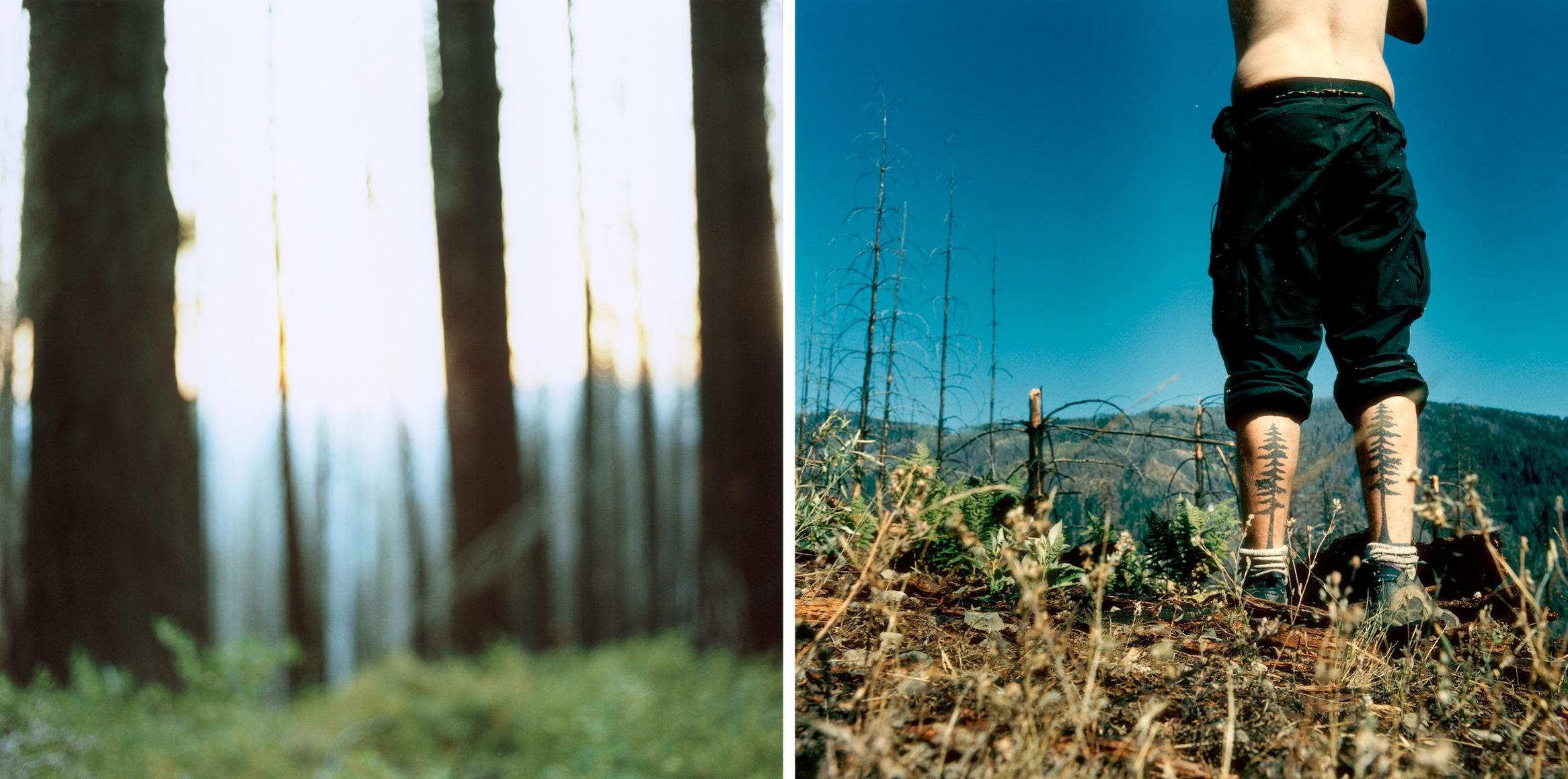 Forestdefenders14.jpg