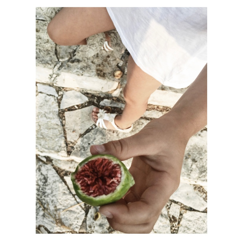 Foraging in Greece for wild figs