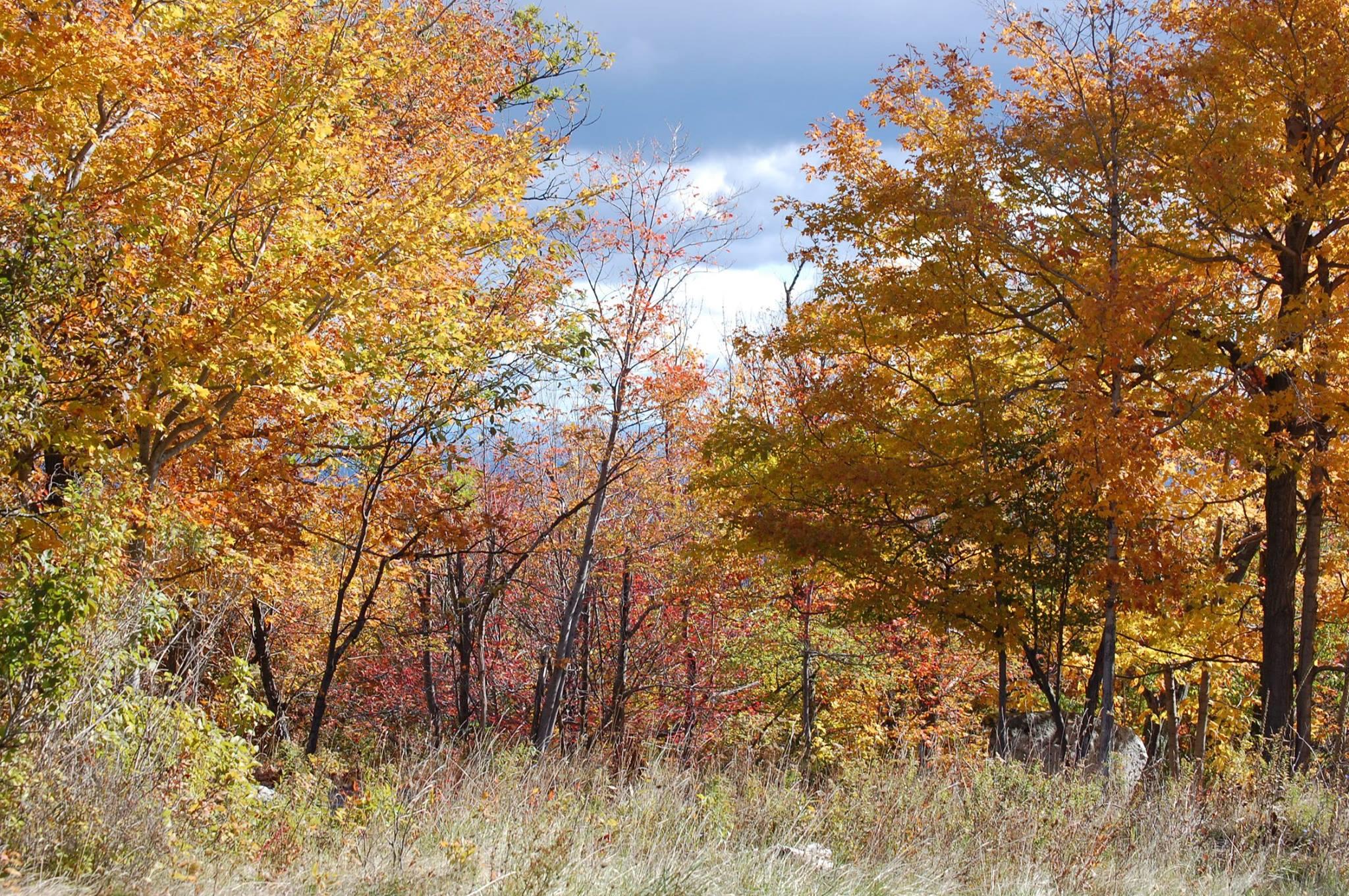 yellow woods.jpg