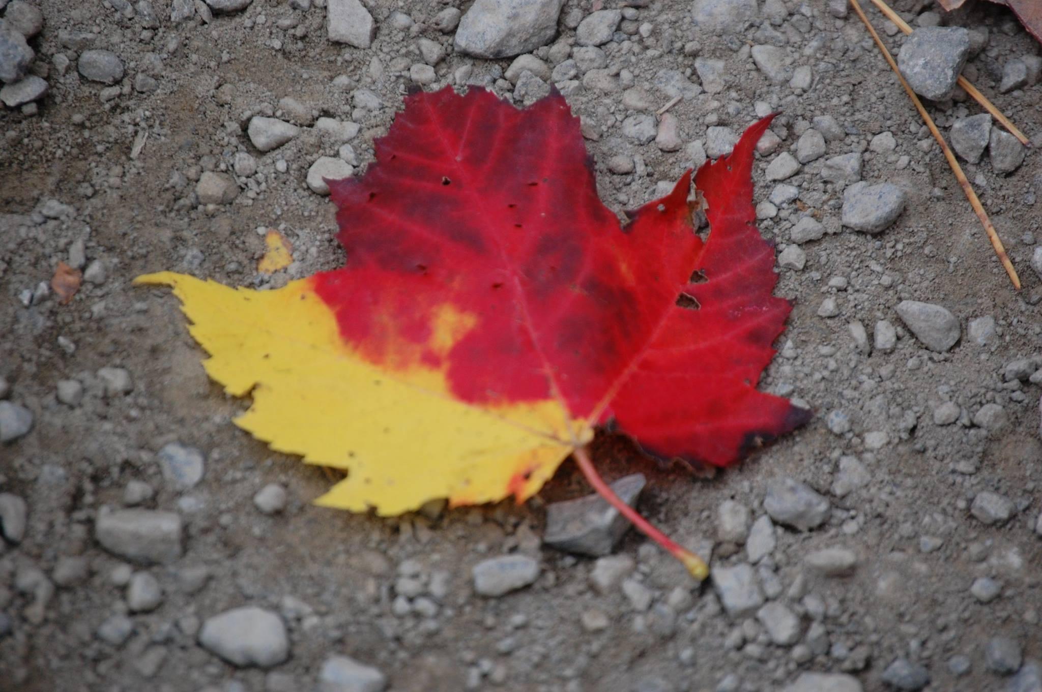 one leaf.JPG