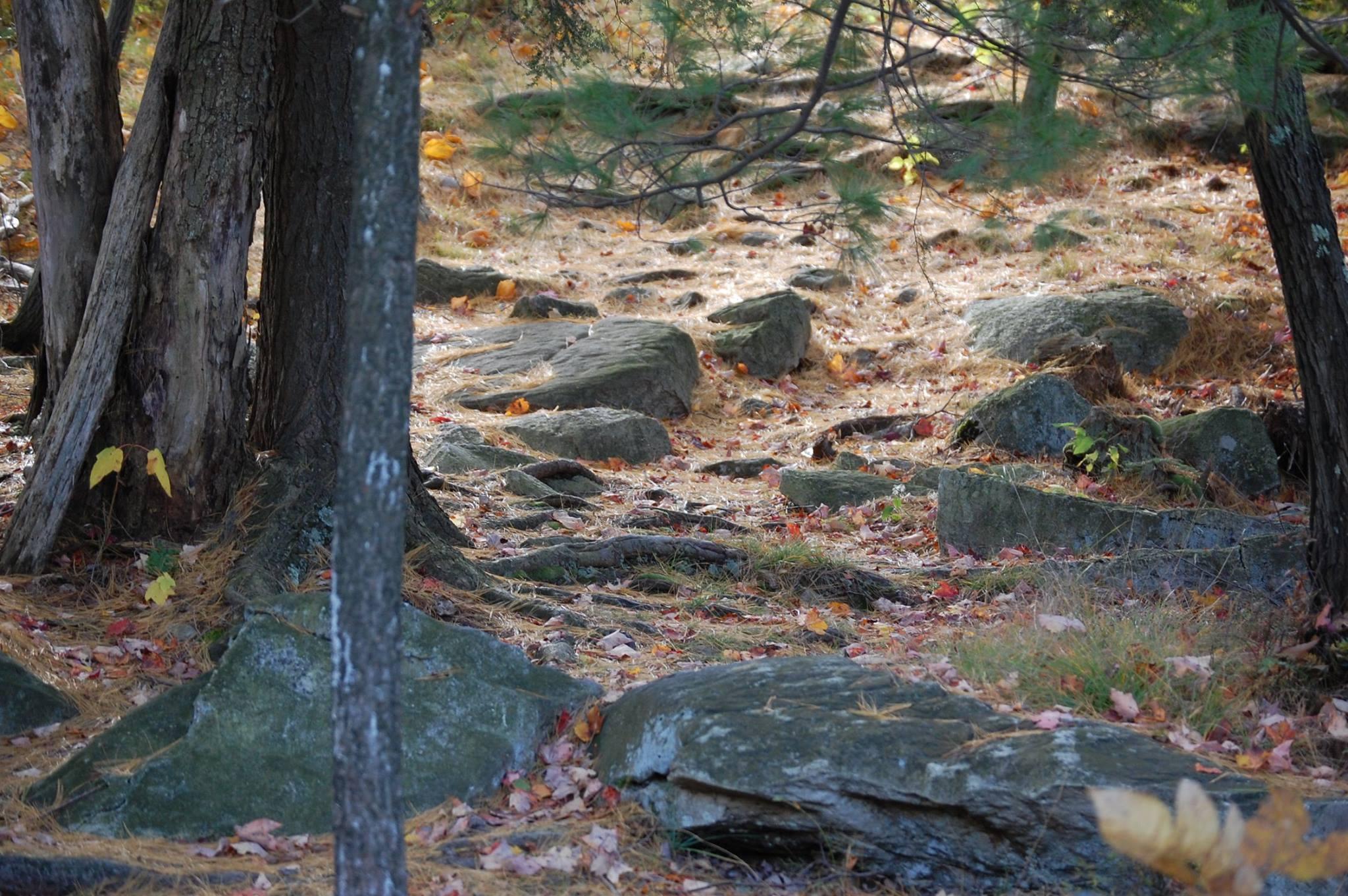 stones and pine needles.JPG