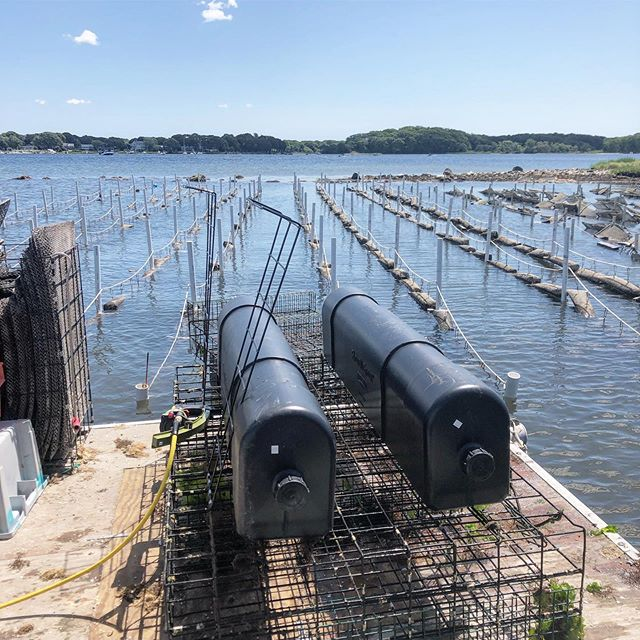 Farm's summer transformation nearly complete.. floating gear and intertidal long line system mean more flow and less bio-fouling = happy clean feedin oysters