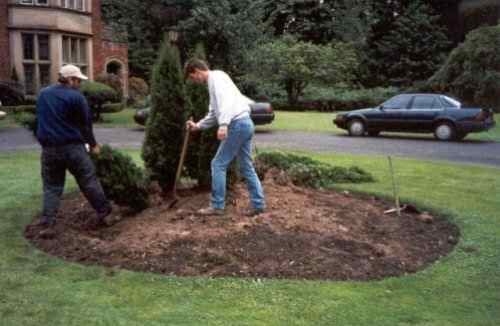 First, the existing trees and shrubs were removed from the center of the circular driveway.