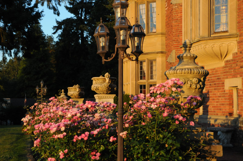 Roses Planted By The Thornes.jpg