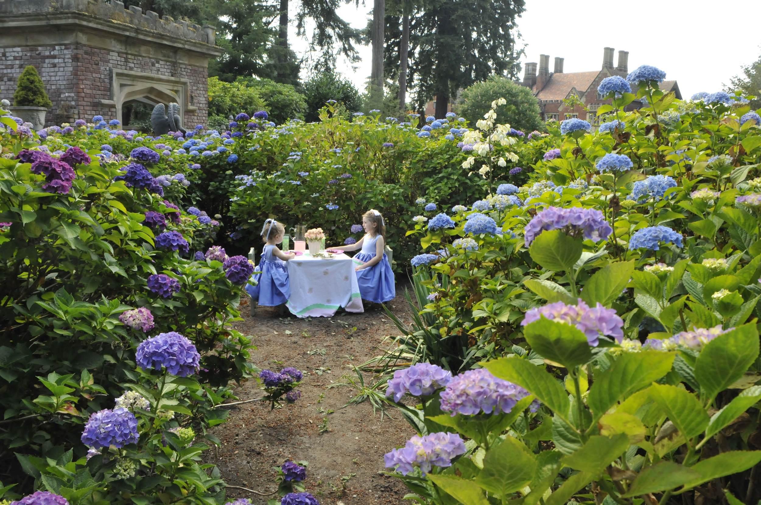 Garden Tea Party.jpg