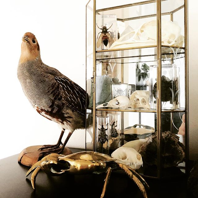 Birds, brass, bones & bugs 💀