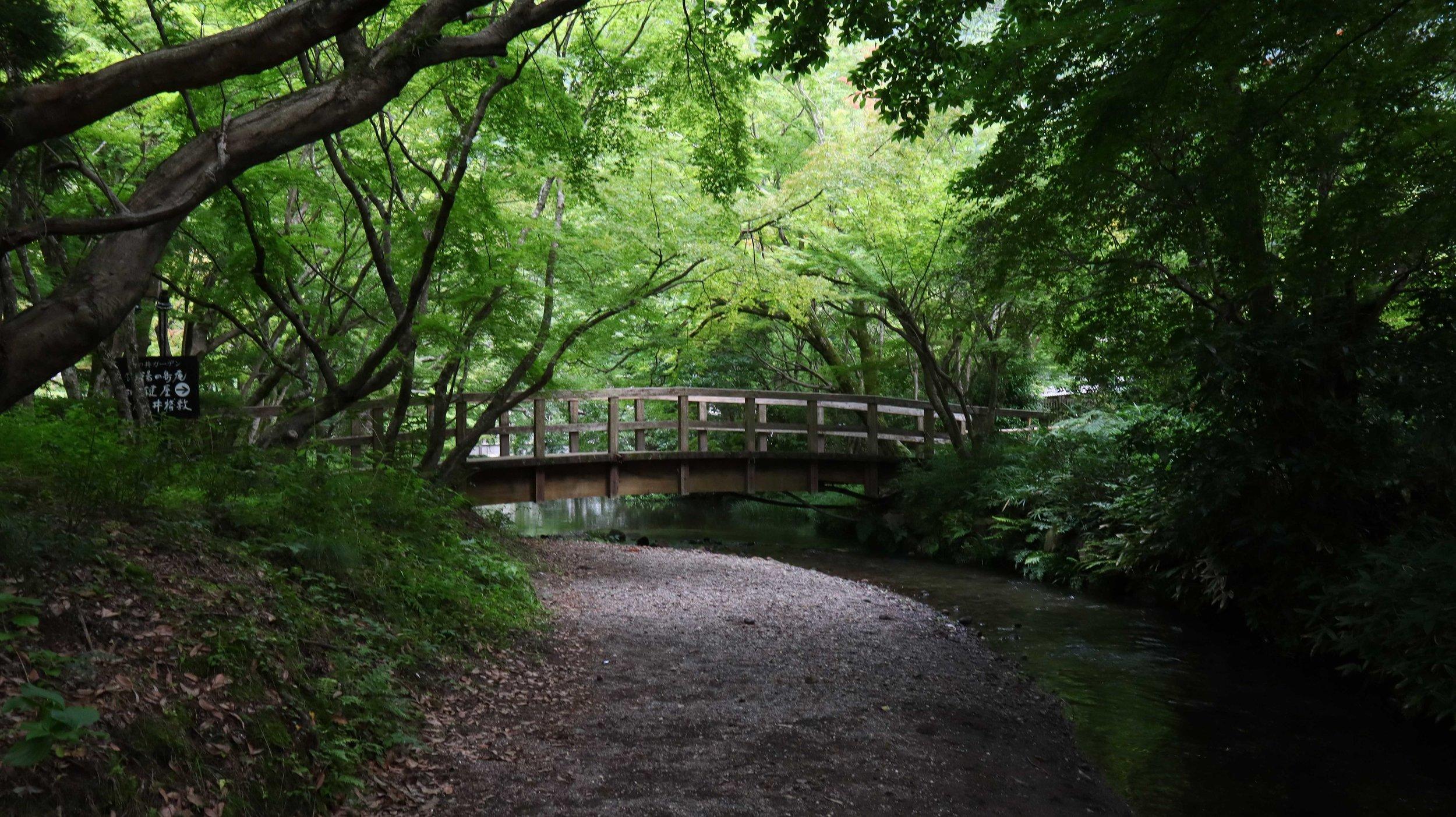 金麟湖附近的森林