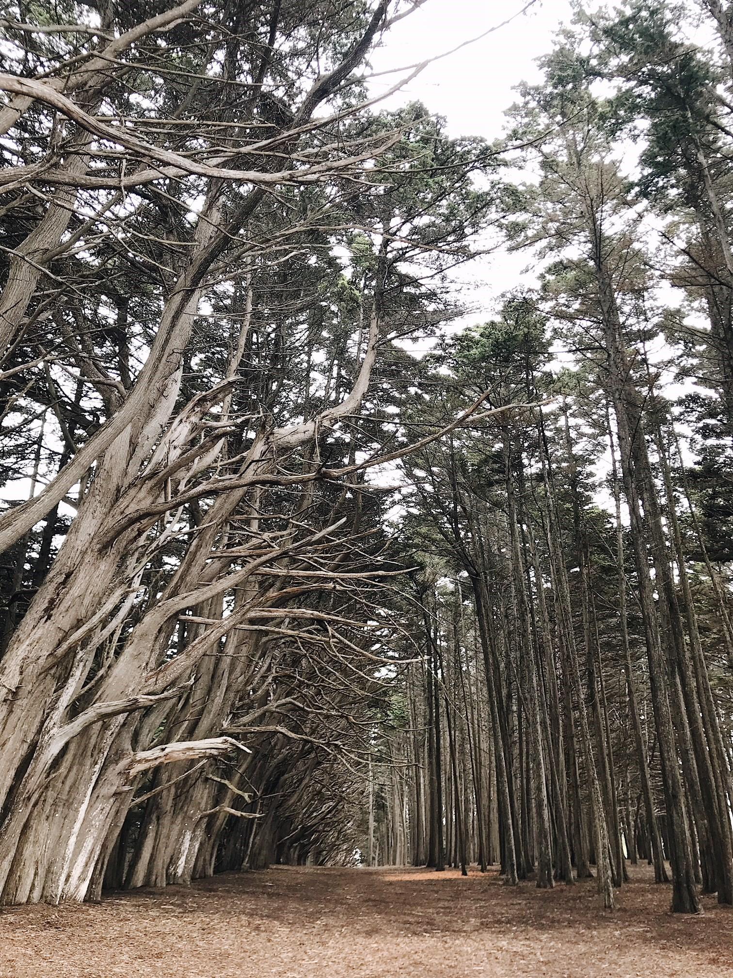 HMB trees.jpg