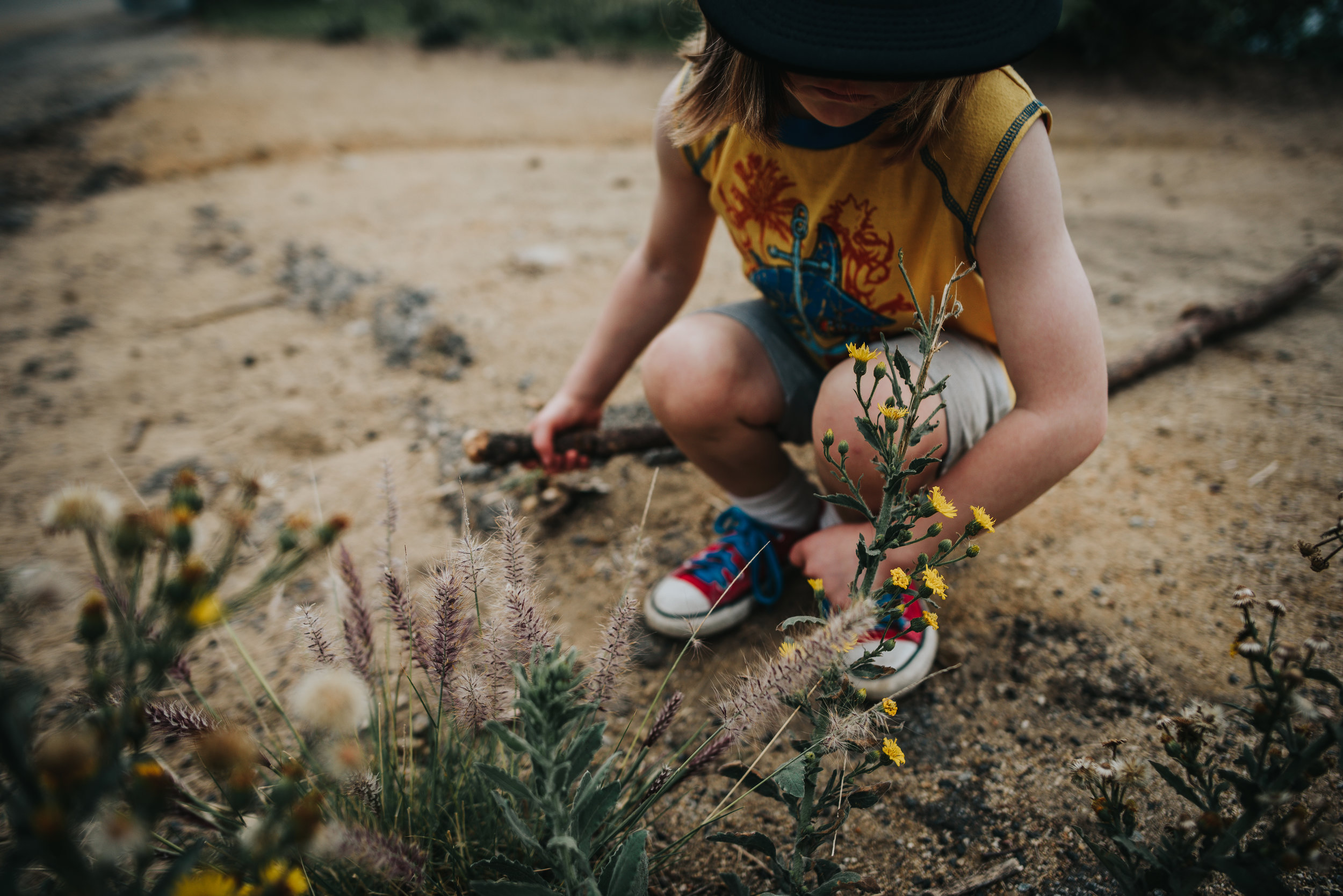 Little boy explores wild flowers during mountain hike in Hollywood, California.
