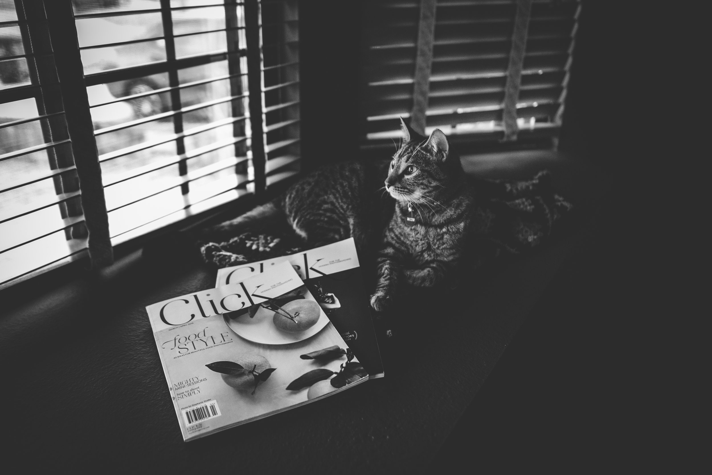 Cat sits in window with magazine from Click and Company in Colorado Springs.