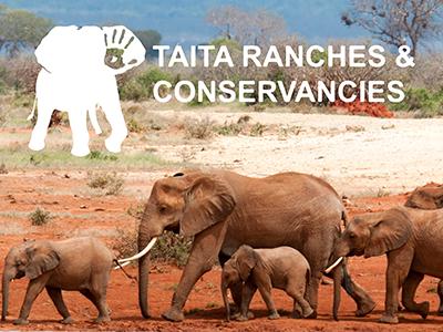 tsavocon taita ranches & conservancies tsavo kenya