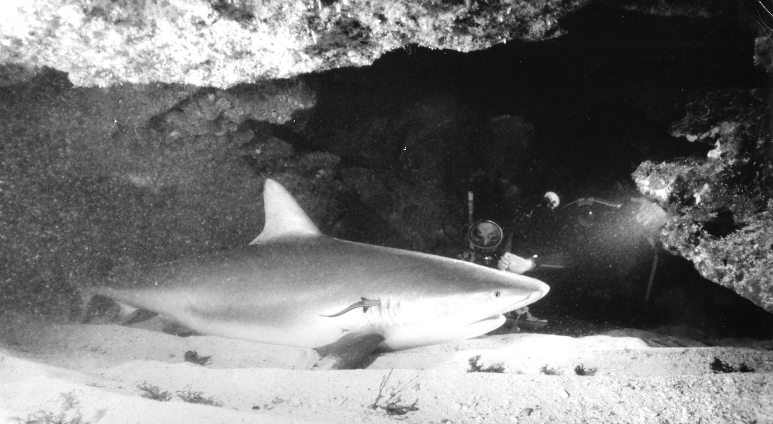 researching sharks in caves
