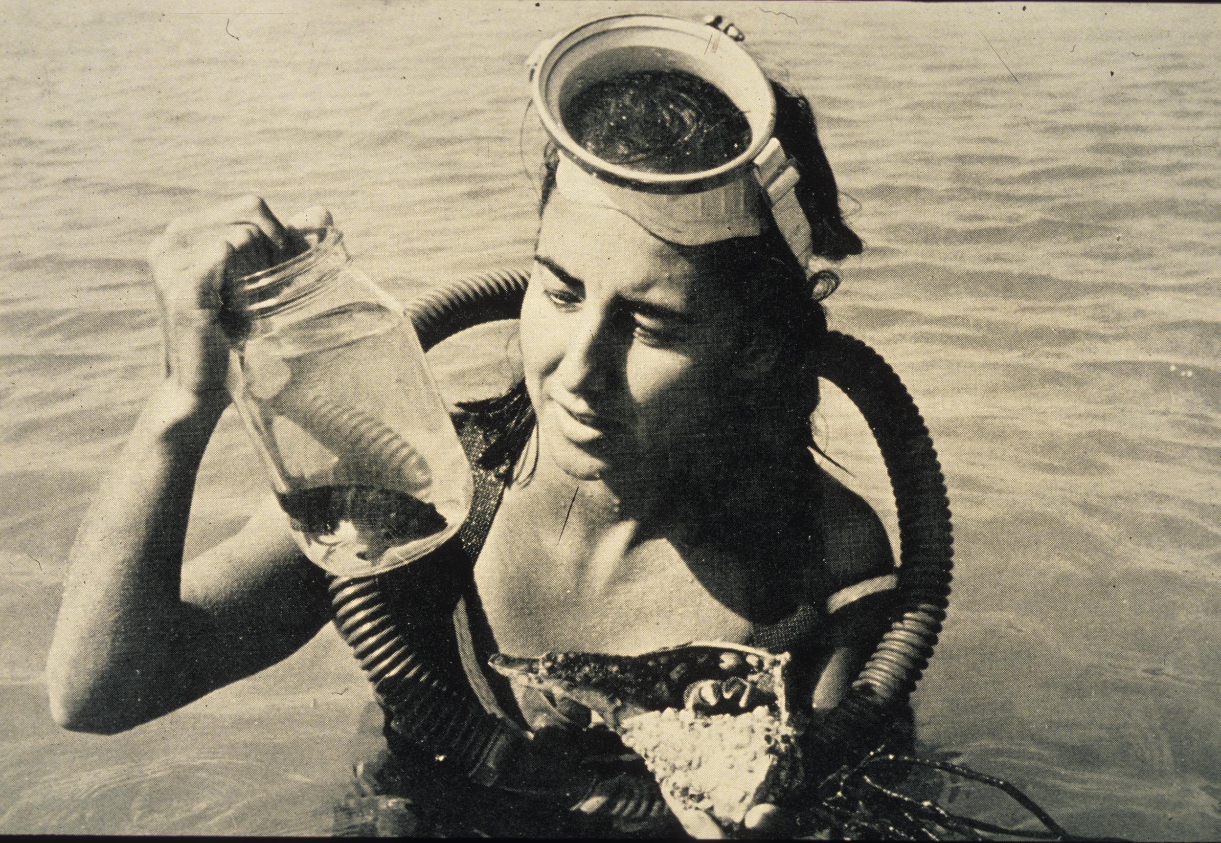 Cape Haze 1959