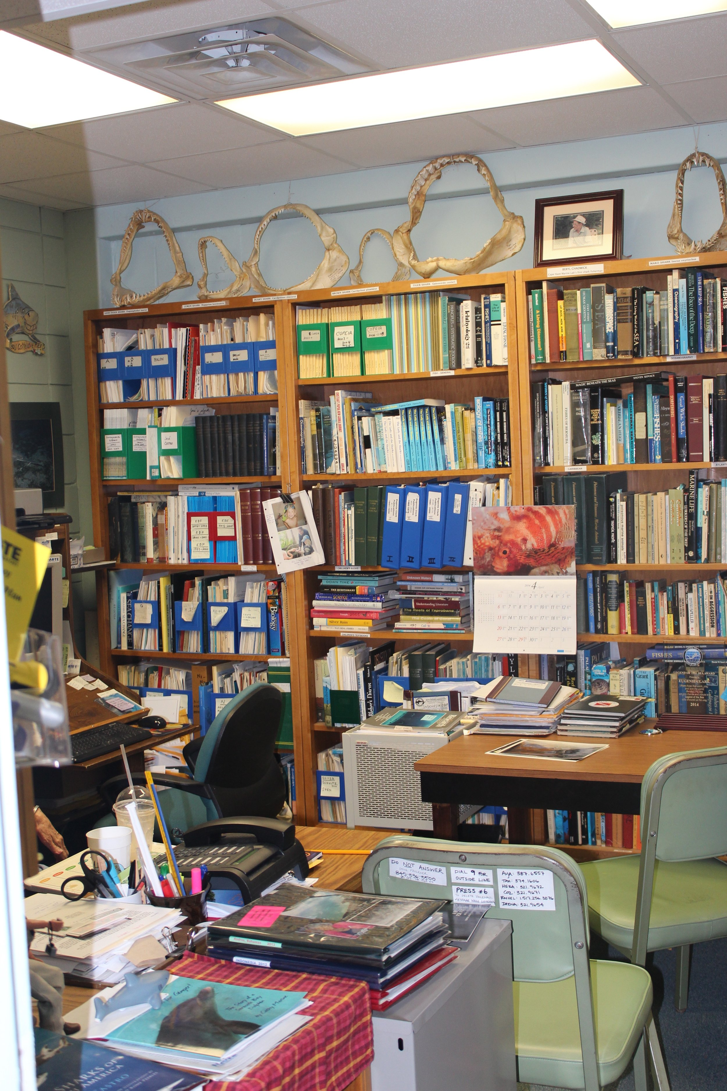 Genie's office with her shark jaw collection