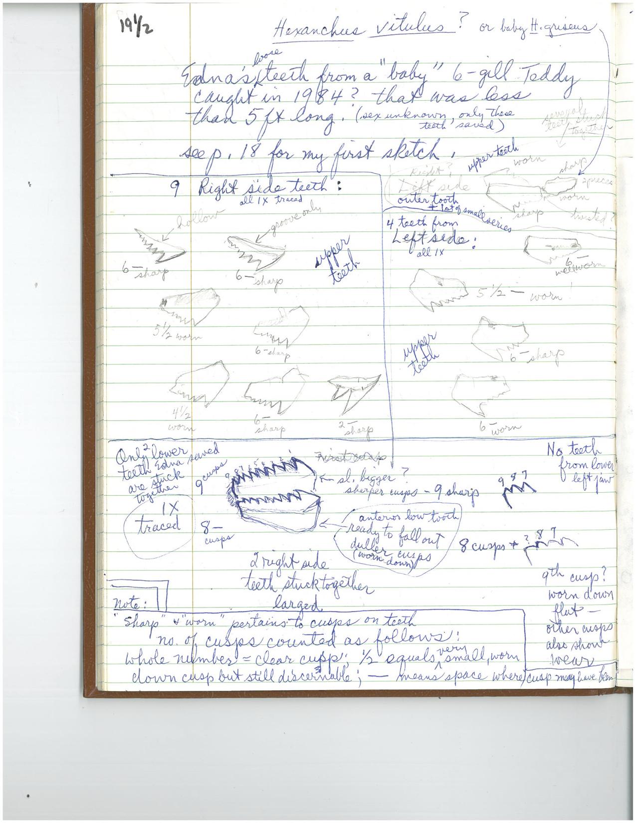 EC notes.2Jul1986.Bermuda.jpg