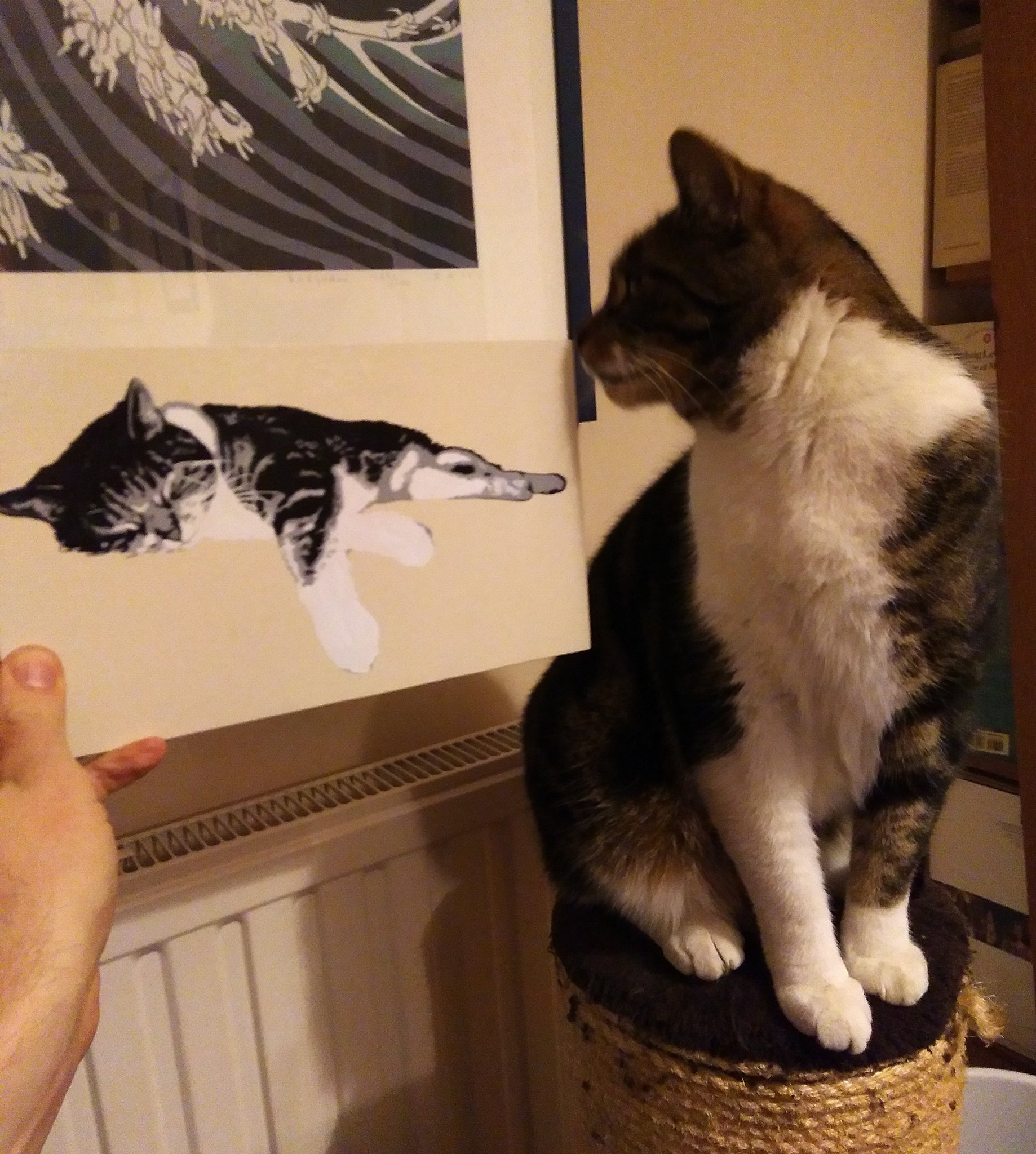 Beautiful tabby cat looking at his own portrait and knowing he is gorgeous